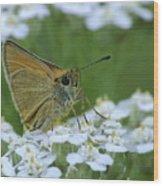 Dion Skipper Yarrow Blossoms Wood Print