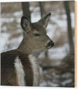 Doe Profile Wood Print
