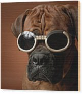 Dog Wearing Sunglasses Wood Print by Chris Amaral