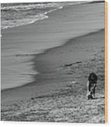 2 Dogs 2 Men Beach  Wood Print