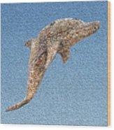 Dolphin Shell Art Sculpture Wood Print