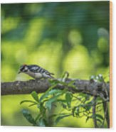 Downy Woodpecker In The Wild Wood Print