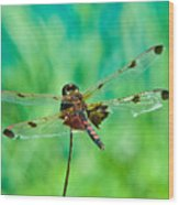 Dragonfly Resting Wood Print