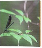 Dragonfly Wood Print