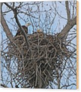 2 Eagles On Nest  3172b  Wood Print