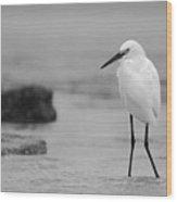 Egret In Black And White Wood Print