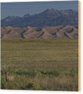 Eight Point Buck In The Grass Lands Of The Great Sand Dunes Wood Print
