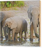 Elephants At The Bank Of Chobe River In Botswana Wood Print
