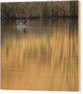 Evening By The Pond Wood Print