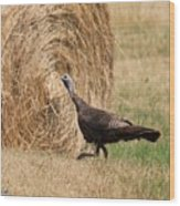 Female Eastern Wild Turkey Wood Print