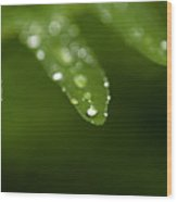 Fern Close-up Of Water Droplets  Wood Print