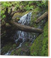 Fern Falls At Jedediah Redwoods State Park Wood Print
