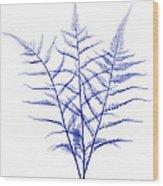 Fern, X-ray Wood Print