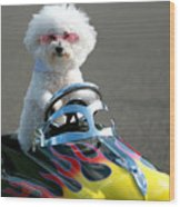 Fifi Goes For A Ride Wood Print