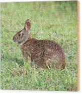 Florida Marsh Rabbit Wood Print