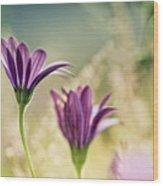 Flower On Summer Meadow Wood Print