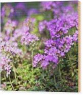 Flowering Thyme Wood Print