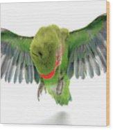 Flying Parrot  Wood Print