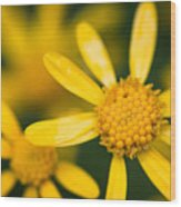 Forest Flower Wood Print
