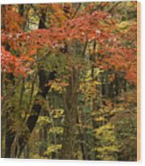 Forest In Autumn Wood Print