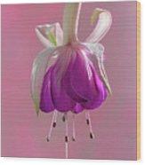 Fuschia Petals Wood Print