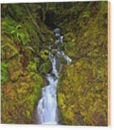 Streaming In The Olympic Rainforest Wood Print