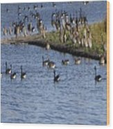Geese On The Water Wood Print