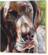 German Short Haired Pointer Wood Print