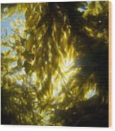 Giant Kelp Forest Wood Print