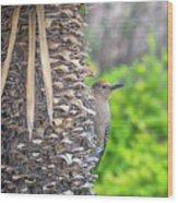 Gila Woodpecker Wood Print