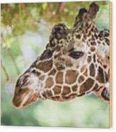 Giraffe Feeding On Green Leaves Of Lettuce Wood Print