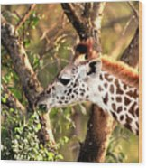 Giraffe Wood Print by Sebastian Musial