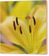 Glorious Lilies Wood Print