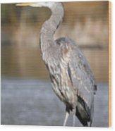 Great Blue Heron In Stanley Park Vancouver Wood Print