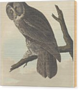 Great Cinereous Owl Wood Print