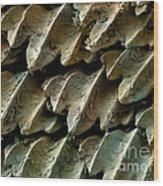 Great Hammerhead Shark Skin, Sem Wood Print