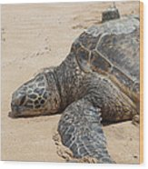 Green Sea Turtle With Gps Wood Print