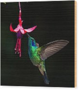 Green Violetear Colibri Thalassinus Wood Print