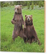 Grizzly Bear Arctos Ursus Wood Print