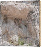 Grupo Nohoch Mul At The Coba Ruins  Wood Print