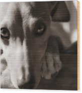 Heart You Italian Greyhound Wood Print