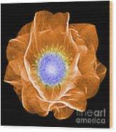 Hellebore Flower, X-ray Wood Print
