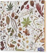 Herbarium Specimen Wood Print