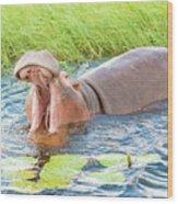 Hippopotamus  Wood Print