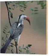 Hornbill In Kenya Wood Print
