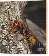 Hornet Vespa Crabo Wood Print