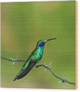 Hummingbird On Barbed Wire Wood Print