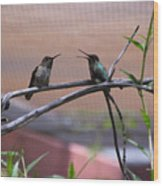 2 Hummingbirds Wood Print