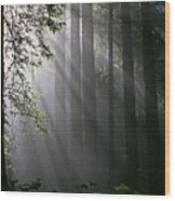 In The California Redwood Forest. Wood Print by Ulrich Burkhalter