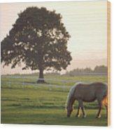 Irish Horse In The Gloaming Wood Print
